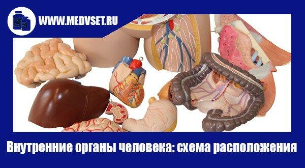 Внутренние органы человека: схема расположения
